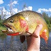 Fish The Fly Guide Service - Expert guide service offering float & wade fishing trips on all local waters. Exclusive access to remote backcountry creeks! Fishing gear included, lunch prepared streamside.