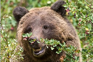 Jackson Hole Grand Expeditions :: Join us for an incredible and everlasting natural experience. Offering professional Wildlife & Scenic Photography Expeditions in Grand Teton and Yellowstone National Parks.