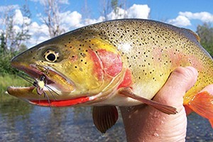 Fish The Fly Guide Service :: Expert guide service offering float & wade fishing trips on all local waters. Exclusive access to remote backcountry creeks! Fishing gear included, lunch prepared streamside.