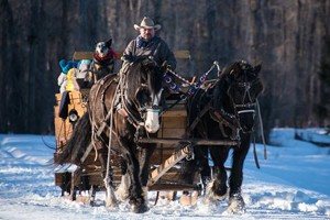 Jackson Hole Vintage Adventures :: Enjoy a snowshoe hike or horse drawn sleigh ride to our Winter Tipi Camp. See abundant wildlife & enjoy elegant dining in a warm tipi. A unique Jackson Hole winter experience!