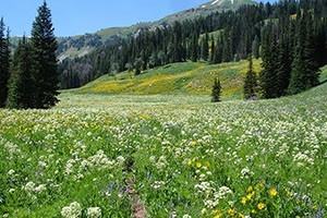 Wildland Trekking - guided hikes around Jackson :: Choose from a number of pre-planned hiking adventures for individuals and families to see wildlife, wildflowers, and spectacular scenery. Custom itineraries available.