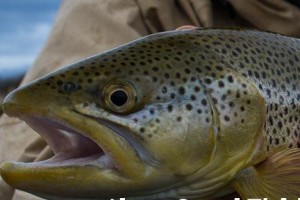 Grand Fishing Adventures :: The only fly shop in Teton Village offers guided fishing trips in Jackson Hole and Grand Teton National Park. Fly casting lessons, experienced guides & scenic floats, too.