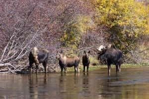 Jackson Hole Scenic River Trips
