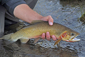 The Red Rock Ranch | Openings This Summer
