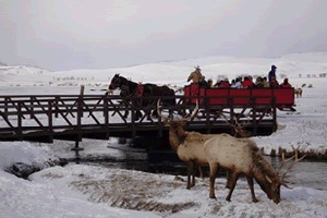 National Elk Refuge Sleigh Rides by Bar T 5