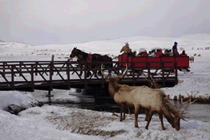 National Elk Refuge Sleigh Rides by Bar T 5 :: Join us as a horse drawn sleigh takes you on a tour of the National Elk Refuge to view Elk up close. Beautiful views of the Tetons - great activity for all ages.