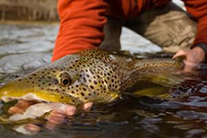 UpStream Anglers - Snake River Fishing Trips