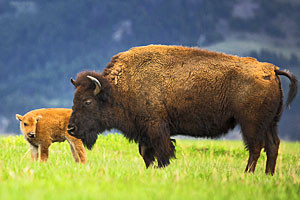 Scenic Safaris - National Park Safaris