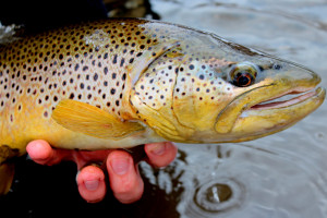 Guided Fishing Trips in the Pinedale Area