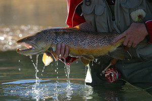 Feathered Hook - Premier Private Fly Fishing Club