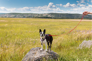 Pet Friendly Lodging in Grand Teton National Park