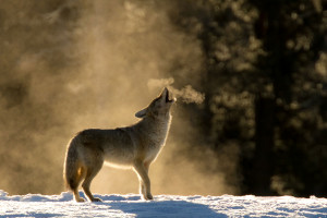 Wildlife Tours with Wyoming Wilds
