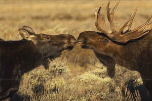 Wyoming Wilds Private National Park Tours