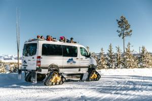 Wildlife Expeditions - Yellowstone & Grand Teton