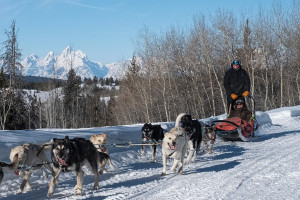 Continental Divide Dog Sled Adventures
