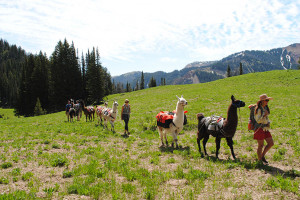 Wildland Trekking | Llama trek into Wyoming range