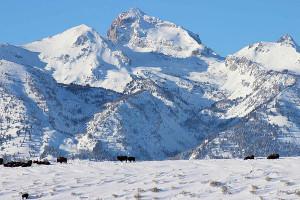 Wildlife Expeditions - Yellowstone & Teton Tours
