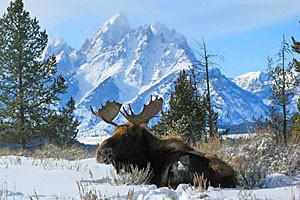 Teton Scenic Winter Half-Day Safari Tour