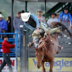 Jackson Hole Rodeo - Authentic Rodeo