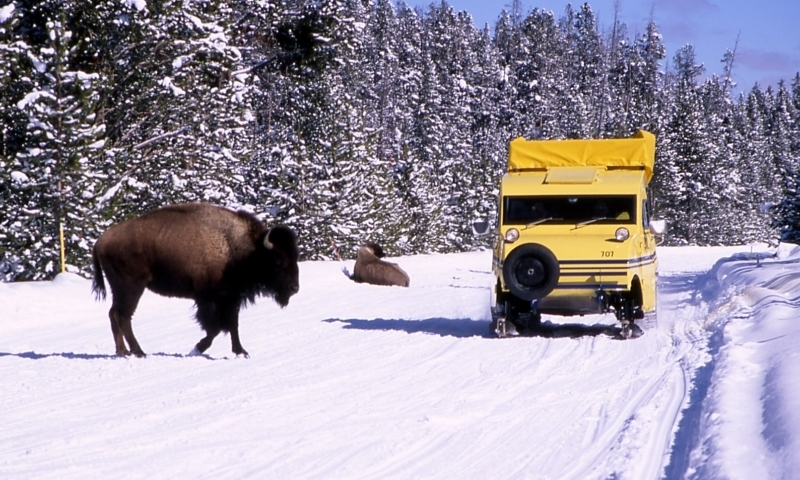Yellowstone Snowcoach Tour