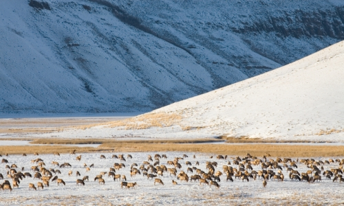 National Elk Refuge Jackson Wyoming