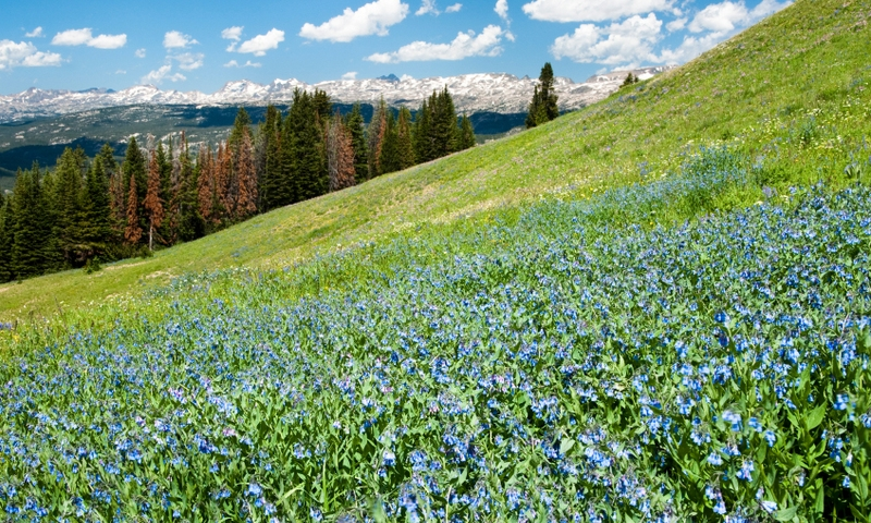 Beartooth Mountains Scenic Drive Wildflowers Hiking Shoshone National Forest
