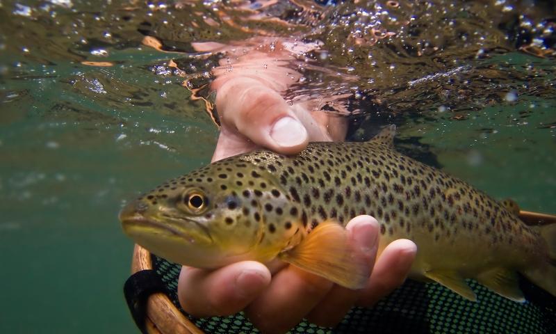 Fishing Fish Trout
