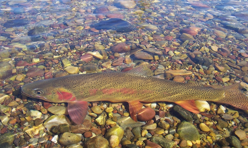 Greys River Wyoming Fly Fishing Camping Alltrips
