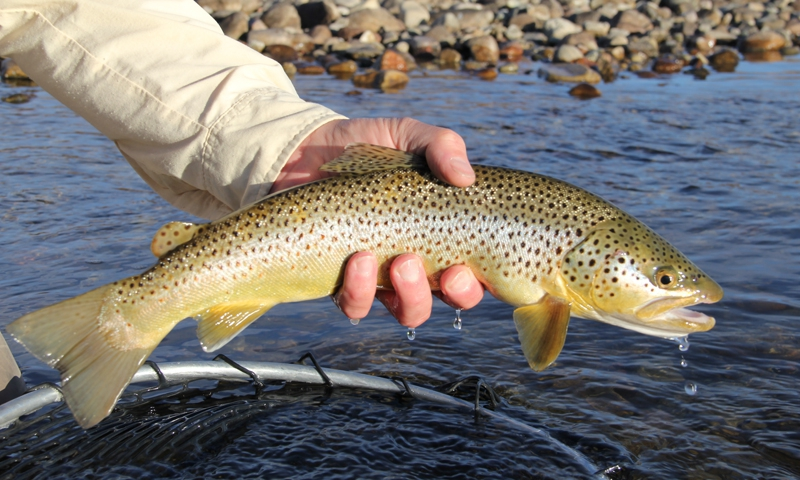 Green River Fly Fishing