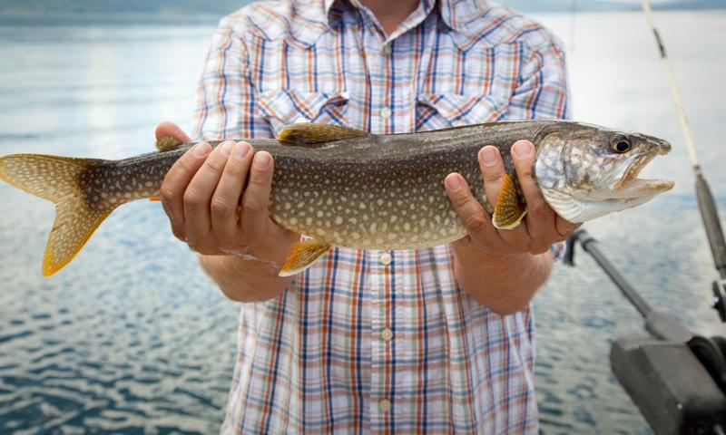 Jackson Lake Grand Teton National Park Fishing Fish