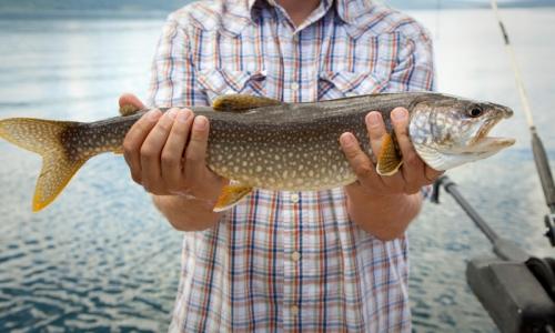 Palisades reservoir idaho fishing camping boating alltrips for Jackson lake fishing