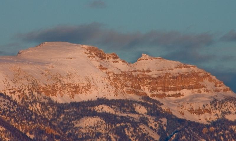 Sleeping Indian Mountain Sheep Wyoming