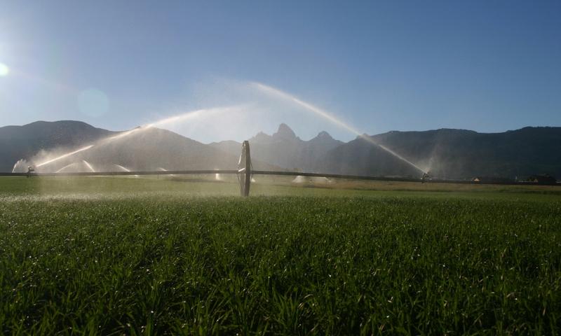 Teton Valley Agriculture Idaho
