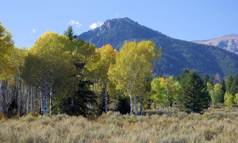 Moose Wilson Road in Wyoming