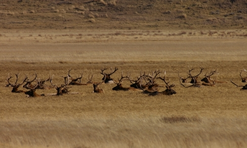 Jackson Hole National Elk Refuge
