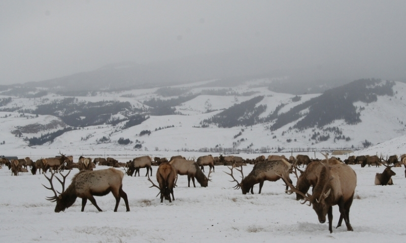 National Elk Refuge Jackson Wyoming Alltrips