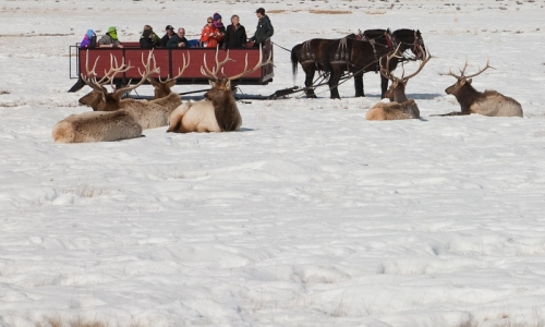 Sleigh Ride on the National Elk Refuge