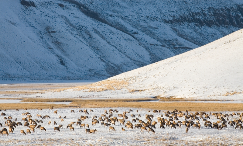 Jackson Hole WY Attractions Elk Refuge