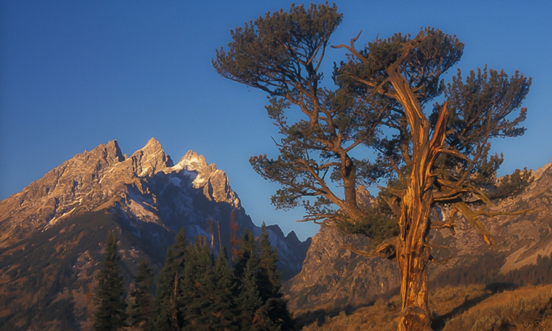 Teton Mountain Range