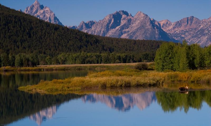 Snake River Oxbow Bend Grand Teton Jackson Wyoming Wildlife Moose