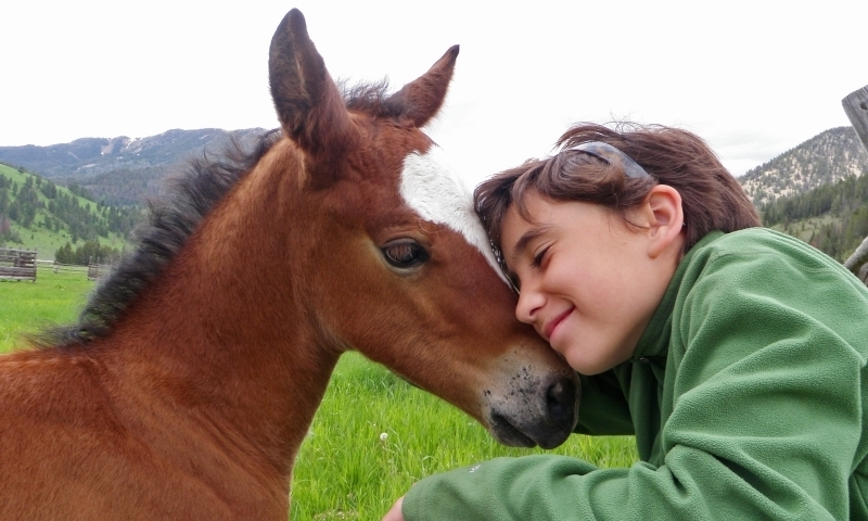 Horse Horseback Riding Kid Family Girl