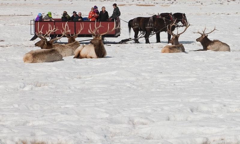 Sleigh Ride on the National Elk Refuge