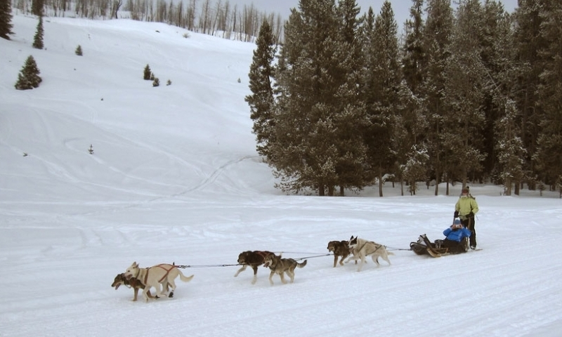 Dog Sled Sledding Granite Canyon