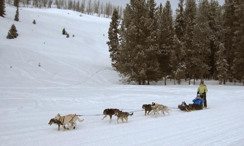 Jackson Hole Dog Sled Rides