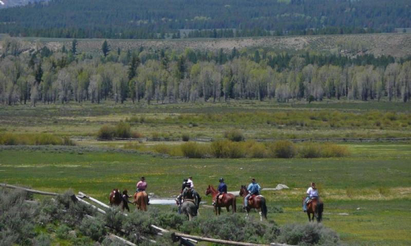 Jackson Hole Wyoming Horse Pack Trip