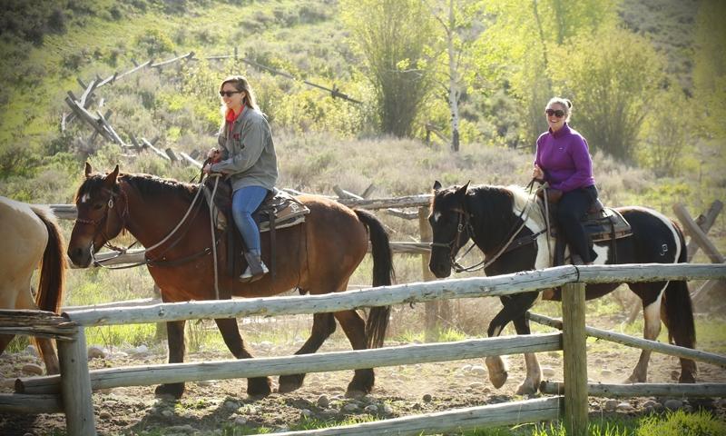 Jackson Hole Horse Pack Trips
