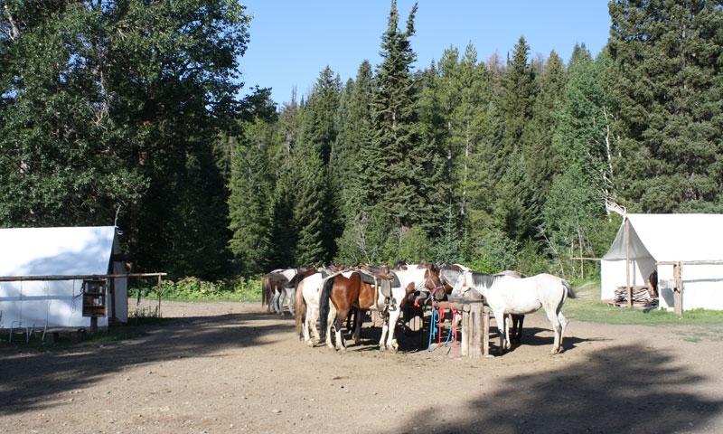 Horseback Riding Jackson Wyoming Grand Teton National Park